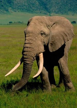 12.12.03 Ngorongoro-Krater Südafrika (Foto: Hans-Arno Ulrich / Horst Schröder (†)