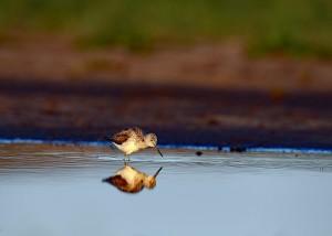 ffs-wildlifefotografie-tgl.jimdo.com