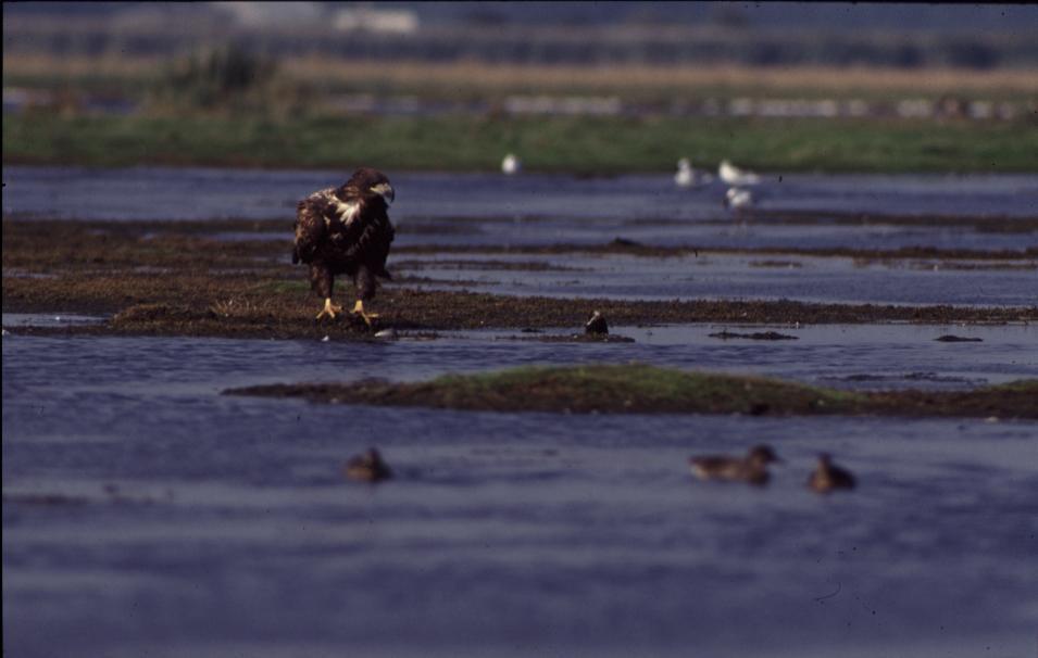 Seeadler Naturpark Stammtisch bei den Störchen