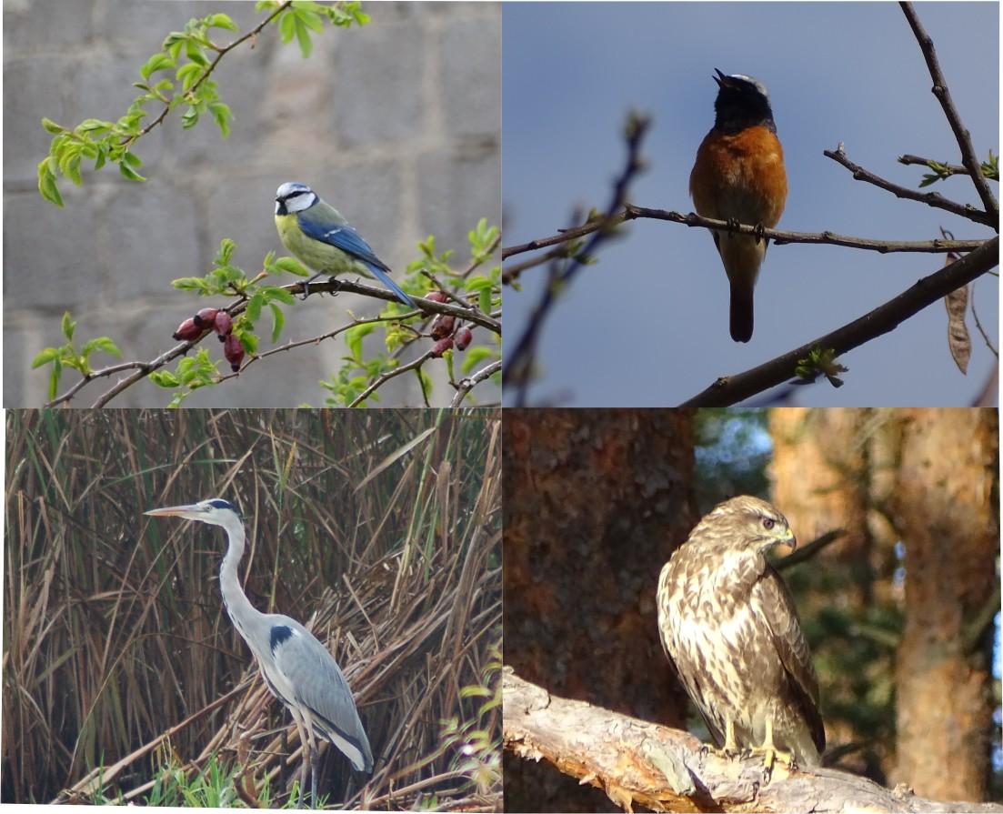 Voegel Schau mal wer da fliegt und singt   Einführungskurs in die Vogelkunde 2020