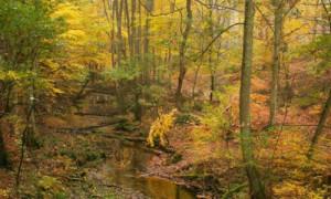 'zauberhafte Briese' Copyright Naturpark Barnim