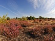 Die Schoenower Heide Copyright: Naturpark Barnim