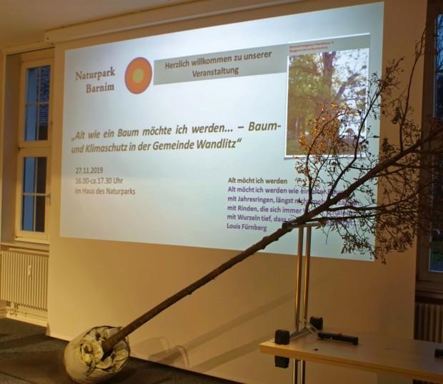 """AltwieeinBaum 2019 620x538 Infoveranstaltung """"Alt wie ein Baum möchte ich werden... – Baum  und Klimaschutz in der Gemeinde Wandlitz"""""""