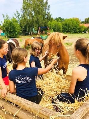 Foto: Antonia Gerke - Pferdekultur Gut Hobrechtsfelde