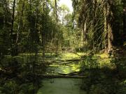 Das Wasser kehrt zurück in die Landschaft - Copyright: Naturpark Barnim