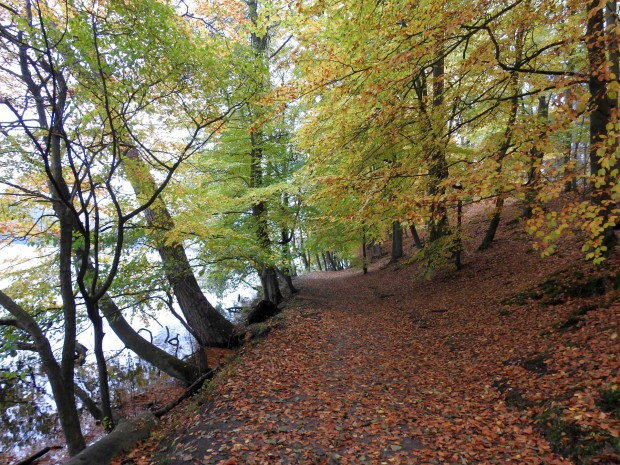 News2 Dez 161028 1327MEZ p9 dscn0230 620x465 Weiterbildung der Berliner Wanderleiter im Naturpark Barnim