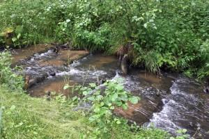 Plätschern im Naturpark: Wer den Wanderweg von Spechthausen Richtung Schönholz erkundet, sollte am Nonnenfließ einen Stopp einlegen und ein wenig dem Lauf des Wassers zusehen – nur einer von vielen landschaftlichen Hinguckern im Naturpark Barnim. (Foto: Naturpark Barnim)