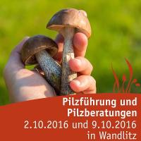 Pilzführung im Herbst in Wandlitz (Foto: Tourismusverein NP Barnim e.V.)