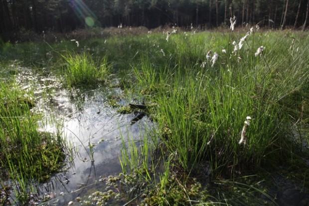 Rabenluch nachher Wollgraswiesen Im Rabenluch Katrin Kutter 02.07.2012 15 07 47 620x413 Rangertour Mal Seen, mal Sand: das Biesenthaler Becken