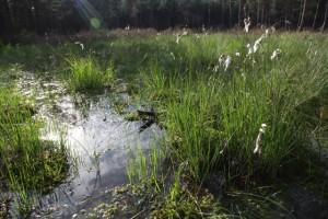 Das Rabenluch, ein kleines Kesselmoor in der Nähe von Biesenthal. Durch die Renaturierung der Moore werden die Grundwasserspeicher aufgefüllt – eine in Hinblick auf langfristige Klimaveränderungen dringend gebotene Maßnahme.