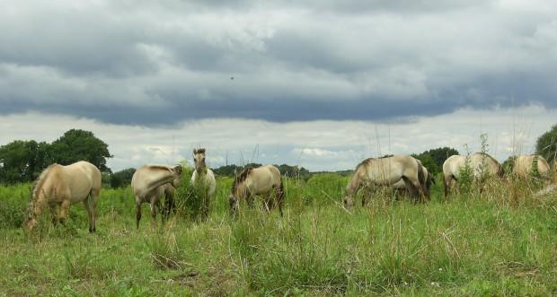 VA 2013 1 620x331 Tierische Landschaftsgestalter