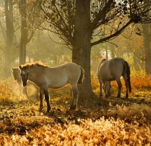Eins von bundesweit 16 Viotopen ist das Waldweideprojekt Hobrechtsfelde im Naturpark Barnim. Bitte geben sie uns ihre Stimme. (Foto: Frank Liebke)