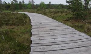 Auf dem Holzbohlenweg durch das Schwarze Moor, Copyright Naturpark Bayerische Rhön