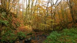 NBR_Herbstwald