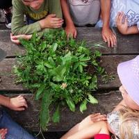 csm der nase nach 010 cdb717f06cbf Kräuterführung/Workshop Grüne Neune – traditionelle Frühlingskräuter