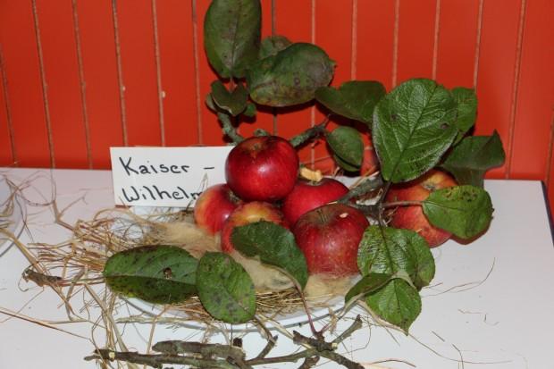 IMG 0370 Apfel 620x413 26.10.2017: Obstbaumverkauf und Sortenbestimmung auf dem Vieh  und Krammarkt