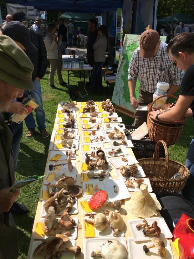 Pilze 2 620x827 Rückblick auf einige Veranstaltungen