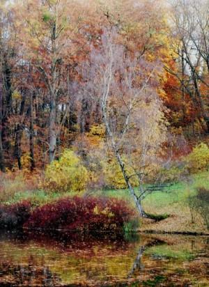 Klicken Sie auf das Bild des Tages im Fotoportal: 14 Tage später_Birke im November_ © VDNTorsten W. _Habichtswald