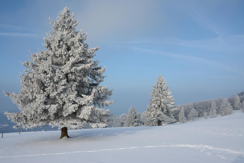 A never-ending winter – © VDNAndy72 – Südschwarzwald