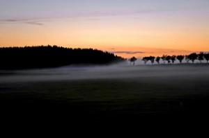 Abendkleid – © VDNG.Streich – Deutsch-Belgischer Naturpark Hohes Venn - Eifel