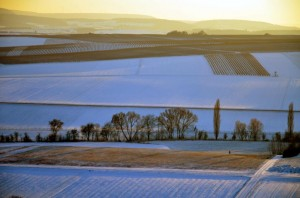 Klicken Sie auf das Bild des Tages im Fotoportal: Abendspaziergang - © VDNP.Ponte - Soonwald-Nahe
