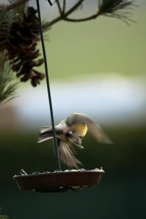 Klicken Sie auf das Bild des Tages im Fotoportal: Abflug – © VDNDieter Becker - Westhavelland