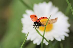 Klicken Sie auf das Bild des Tages im Fotoportal: Abflug in den Frühling - © VDNSigrid Schiller-Bauer – Bayerischer Wald