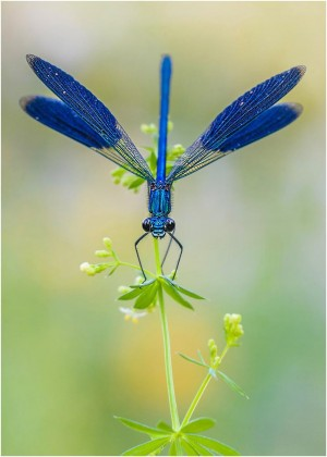 Abflugbereit (HF) – © VDNI. Noack - Nuthe-Nieplitz