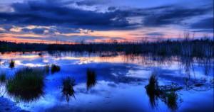 Klicken Sie auf das Bild des Tages im Fotoportal: Abgestorben – © VDNOpa - Steinhuder Meer