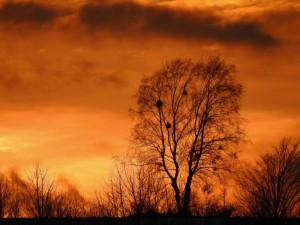 Klicken Sie auf das Bild des Tages im Fotoportal: Afrika – © VDNBrezina Peter - Fichtelgebirge