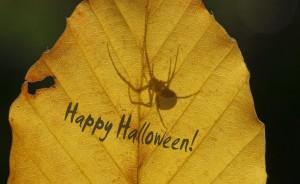Am letzten Tag ist auch noch Halloween... – © VDNSonja Haase – Lüneburger Heide