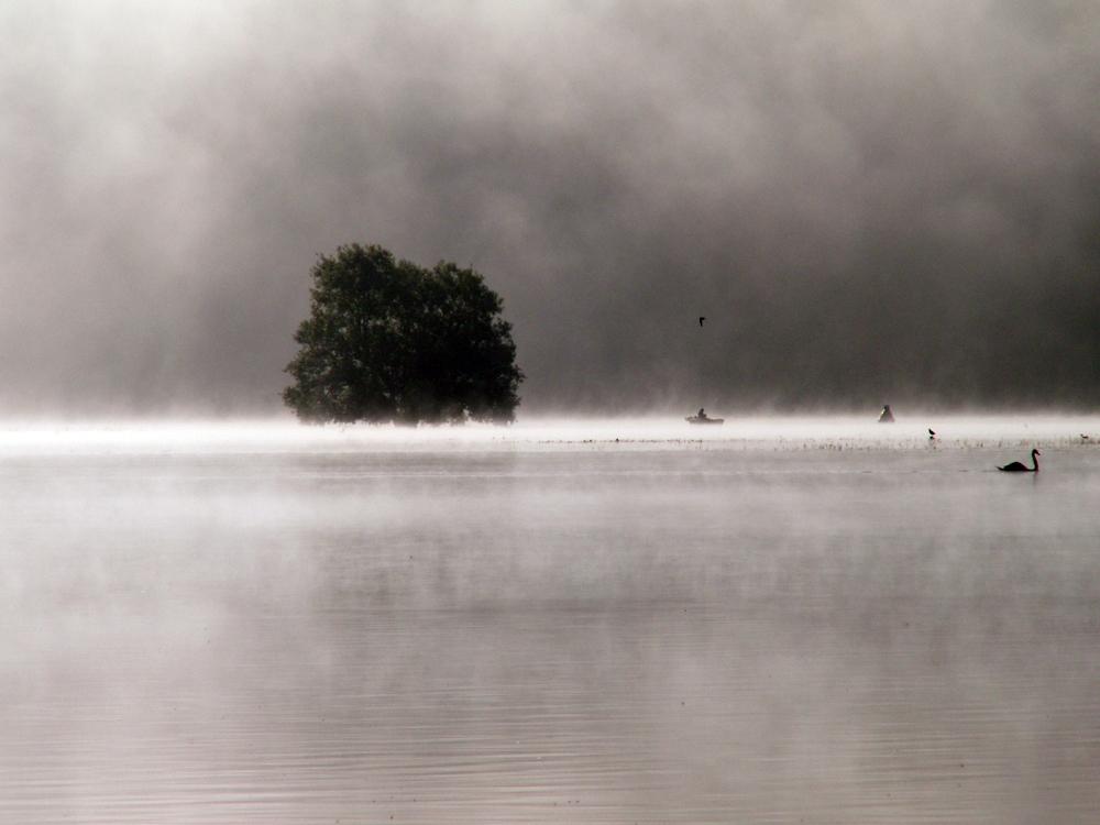 Baum Fata Morgana_ VDNHasinghu_ Kellerwald-Edersee