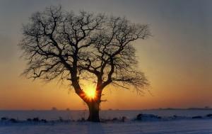 Baum im Gegenlicht_ VDNblum_ Lauenburgische Seen