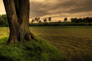 Baum im Krähenbusch_ VDNJürgen Rei_ Hohe Mark - Westmünsterland
