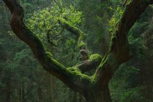 Baumgestalten – © VDNUwe Wittbrock – Teutoburger Wald  Eggegebirge