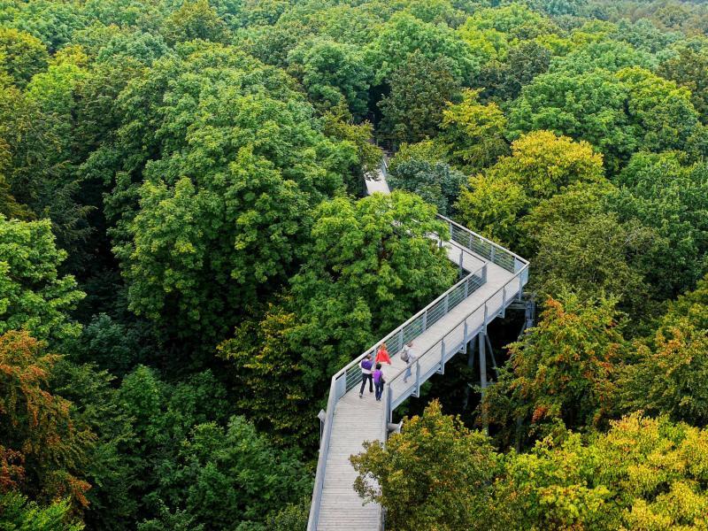 Baumkronenpfad Hainich – © VDNUlrich Mingram - Eichsfeld-Hainich-Werratal
