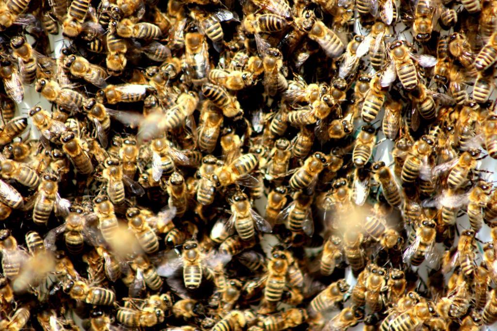 Bienen so weit das Auge reicht - © VDNJannis Edelmann – Fichtelgebirge