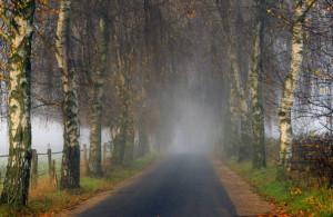 Klicken Sie auf das Bild des Tages im Fotoportal: Birkenweg – © VDNblum - Lauenburgische Seen
