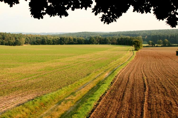 Blick in die Ferne – © VDNK. Rehmann - Dübener Heide