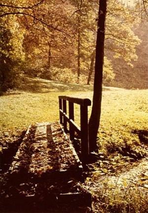 Brücke im Wald – © VDNHeiner Franz – Schönbuch