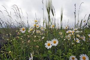Klicken Sie auf das Bild des Tages im Fotoportal: Bunte Blumen- © VDNHellwig - Lauenburgische Seen