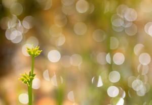 Klicken Sie auf das Bild des Tages im Fotoportal: Das Glitzern, die Farben... – © VDNUlrike Sobick - Rheinland