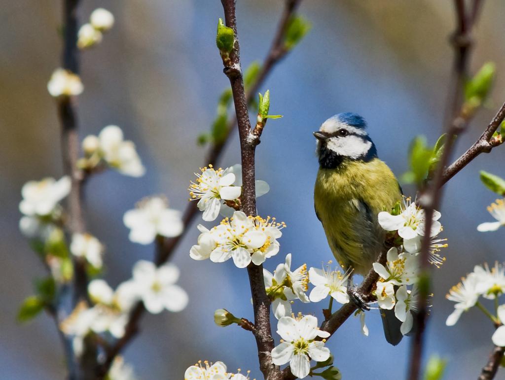 Das war im Frühling 42012 - © VDNPeter Punzel – Barnim