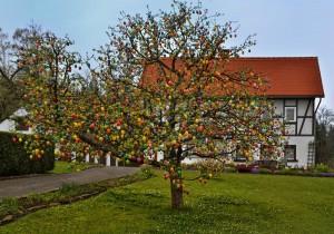 Der Ostereierbaum – © VDNBernd Tannerberger - Zittauer Gebirge