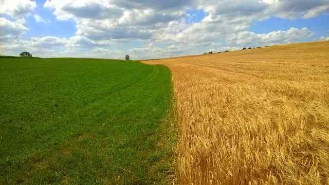 Klicken Sie auf das Bild des Tages im Fotoportal: Der Tag der Ernte naht – © VDNBuidlmacher - Fichtelgebirge