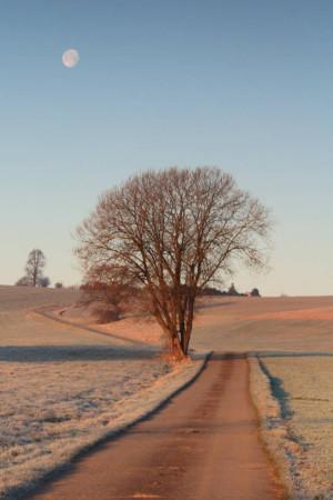 Klicken Sie auf das Bild des Tages im Fotoportal: Der Weg zum Mond ( HF ) – © VDNannett Paul - Zittauer Gebirge