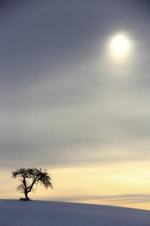 Klicken Sie auf das Bild des Tages im Fotoportal: Dezembermorgen... – © VDNAndreas Gick - Hessische Rhön