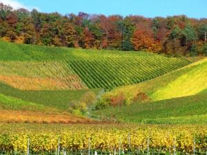 Die Farben des Weines – © VDNClara Spielmann – Stromberg-Heuchelberg