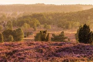 Klicken Sie auf das Bild des Tages im Fotoportal: Die Heide im Regen – © VDNRobert Sommer - Lüneburger Heide