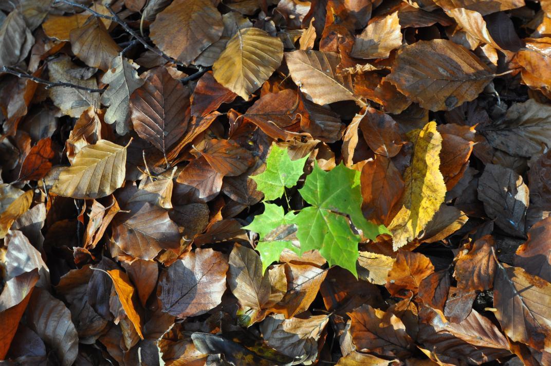 Die Natur erwacht – © VDN-Chr. Geisler - Harz Niedersachsen